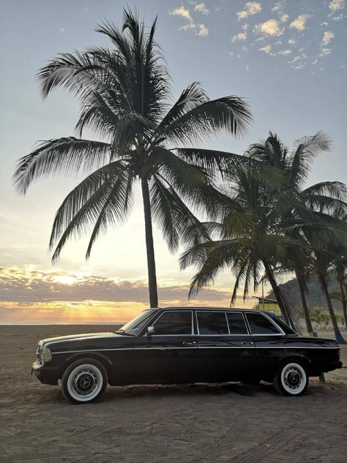 PALM-TREE-LIMOUSINE-COSTA-RICA.jpg